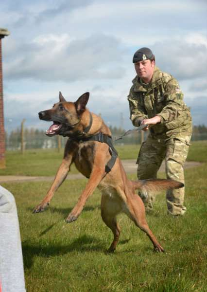 IMAGE: Lance Corporal Chris Talbot with Military Working Dog Eve, demonstrating the role of a protection dog and its handler.''The Reserve Unit, 101 Military working Dog Squadron (101 MWD Sqn), was launched in March 2015 and trains every Tuesday from 7pm-9pm aat St George's Barracks, North Luffenham.''The Squadron forms part of 1st Military Working Dog Regiment that provides the only deployable military working dog and veterinary capability within the whole of the British Army. Their Dogs and their handlers provide vital detect and protect capabilities for troops on the ground.''Photographer: Corporal Luisa Scott RLC'''NOTE TO DESKS: 'MoD release authorised handout images. 'All images remain crown copyright. 'Photo credit to read - Corporal Luisa Scott RLC (Phot) EMN-160804-123432001