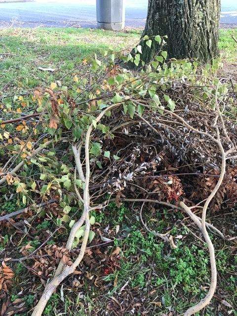 Flytippers dumped branches and tree debris on to the green by Broadlands Avenue, Lodge Road and Waterside Close
