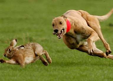 Hare coursing news. ANL-160401-095543001