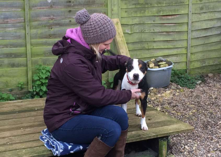 Mutts Nutts rescue dog Poppy receiving Reiki treatment EMN-160213-131914001