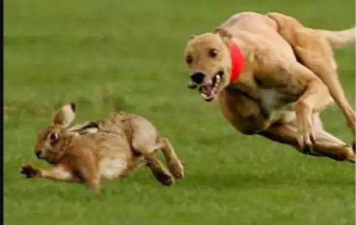 Hare coursing traditionally starts in September but police say it is starting early