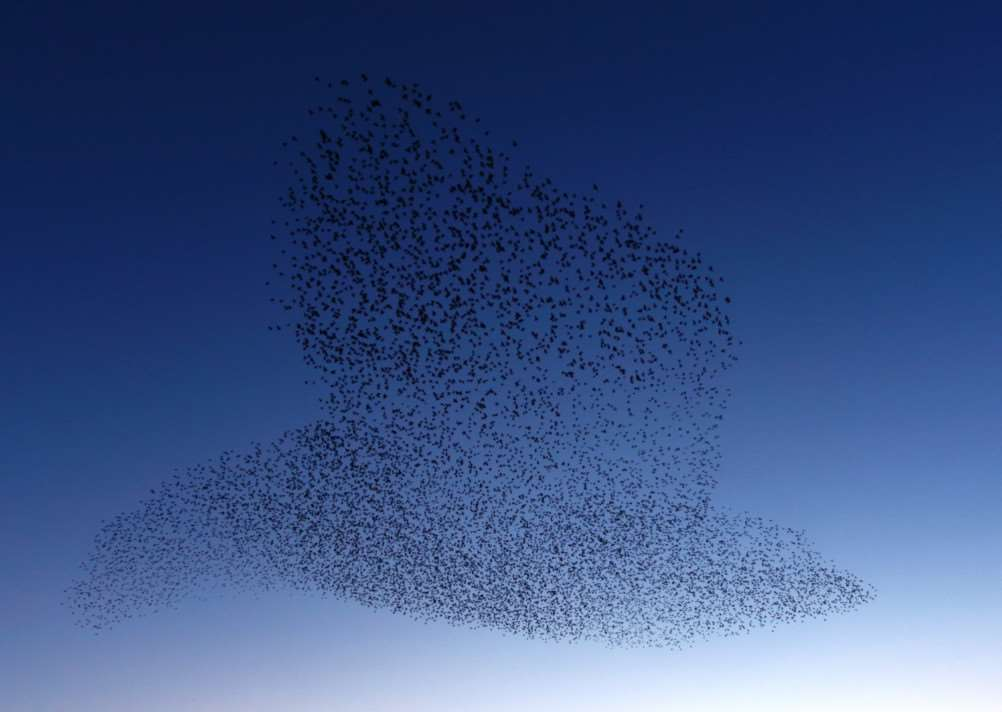 Steve Houghton took this picture of a starling murmuration in the shape of a bird on the shores of Rutland Water. Photo: Fourwings Wildlife Imaging. EMN-151203-111429001