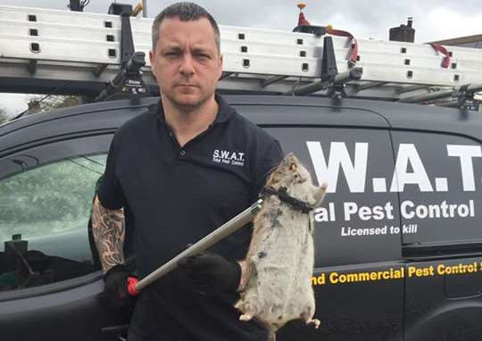 Spencer Harris with the 'mega rat' shortly after it was trapped.