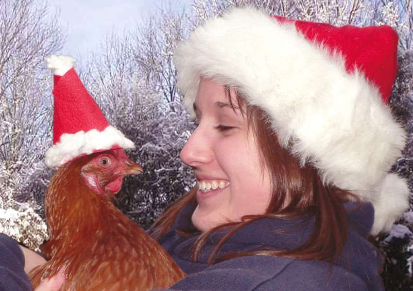 Ex-commercial hens need new homes