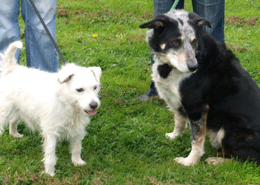 Shep and Milo for Three Counties Dog Rescue EMN-140704-132501001