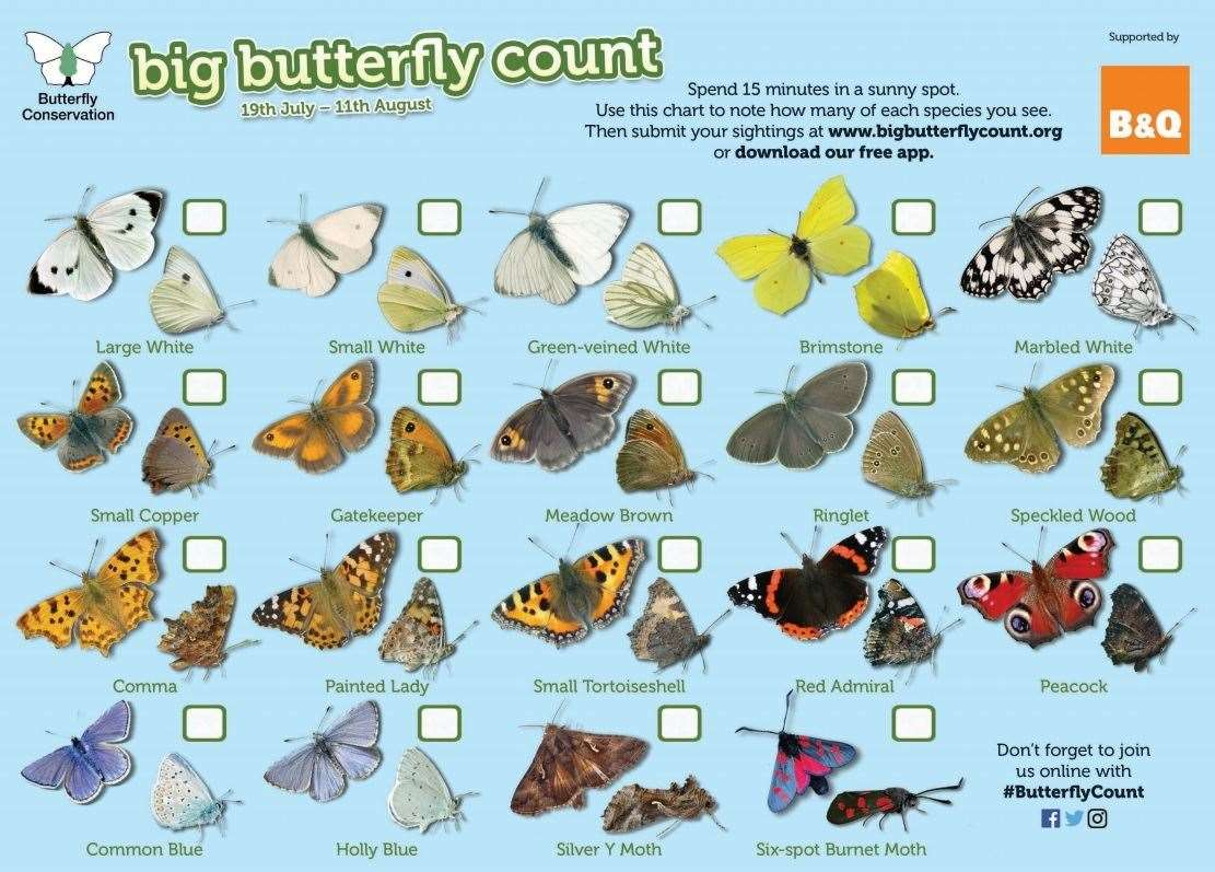 The Big Butterfly Count chart (14029111)