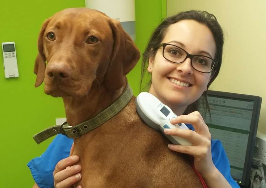 Natasha Sangherra scans Ruby for a microchip under new legislation which came into effect on Tuesday.