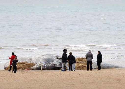 One of the many whales to have washed up on the east coast of England - Photo: PA