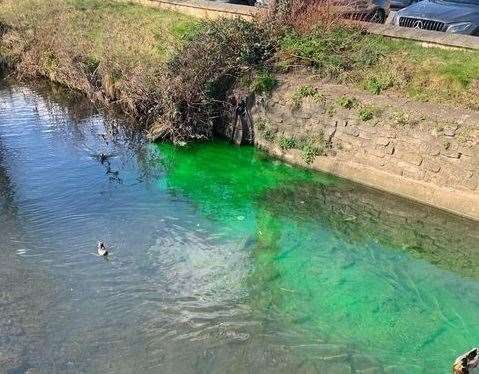 The bright green substance in Stamford's millstream
