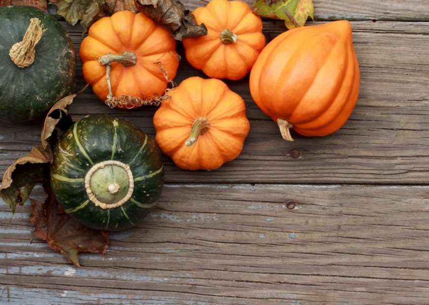 A festival aimed at reducing pumpkin wastage is to be held in Durrington next Saturday