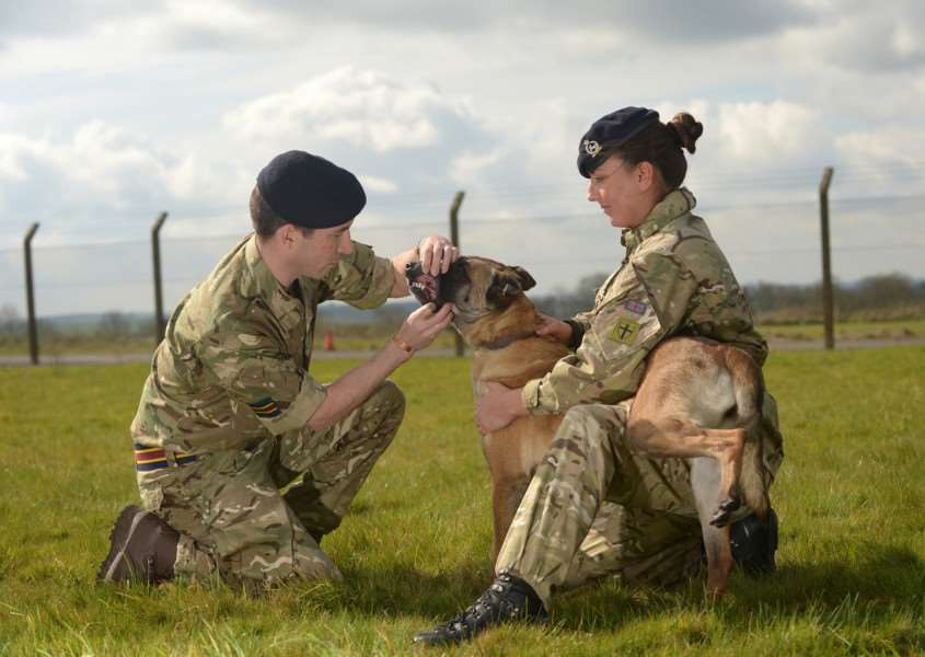 IMAGE: Capt Bennet, veterinary officer inspects Military working dog Dazz with the help of Private Rosie Jones.''The Reserve Unit, 101 M ilitary working Dog Squadron (101 MWD Sqn), was launched in March 2015 and trains every Tuesday from 7pm-9pm aat St George's Barracks, North Luffenham.''The Squadron forms part of 1st Military Working Dog Regiment that provides the only deployable military working dog and veterinary capability within the whole of the British Army. Their Dogs and their handlers provide vital detect and protect capabilities for troops on the ground.''Photographer: Corporal Luisa Scott RLC'''NOTE TO DESKS: 'MoD release authorised handout images. 'All images remain crown copyright. 'Photo credit to read - Corporal Luisa Scott RLC (Phot) EMN-160804-123517001
