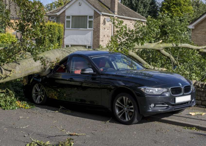 The tree which fell on the BMW in Roman Bank Stamford. By Lee Hellwing