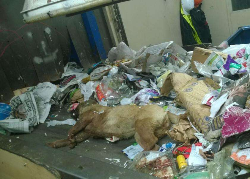 The poor dog found amongst recycling at Lincolnshire's Caythorpe plant