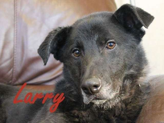 Larry - Dog of the Week (9782044)