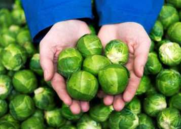 Morrisons' monster sprouts