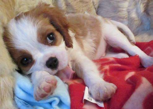 People are being warned against fraudsters pretending to sell puppies ANL-150825-101129001