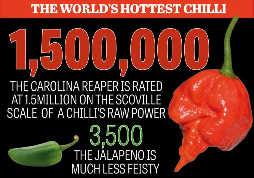 How does the Carolina Reaper chilli compare to others?