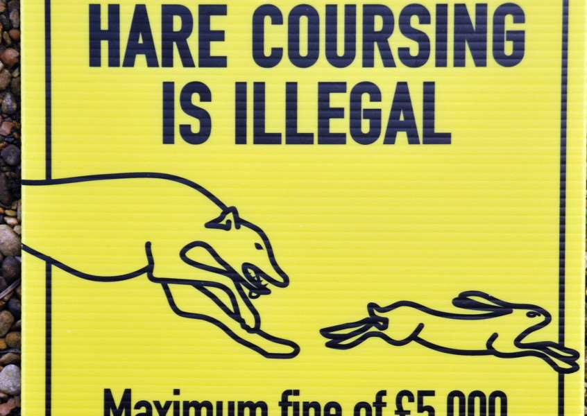 Hare coursing news.