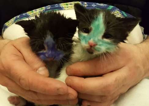 Kittens had been coloured in, ready to be thrown to doge. Picture: Ross Parry Agency
