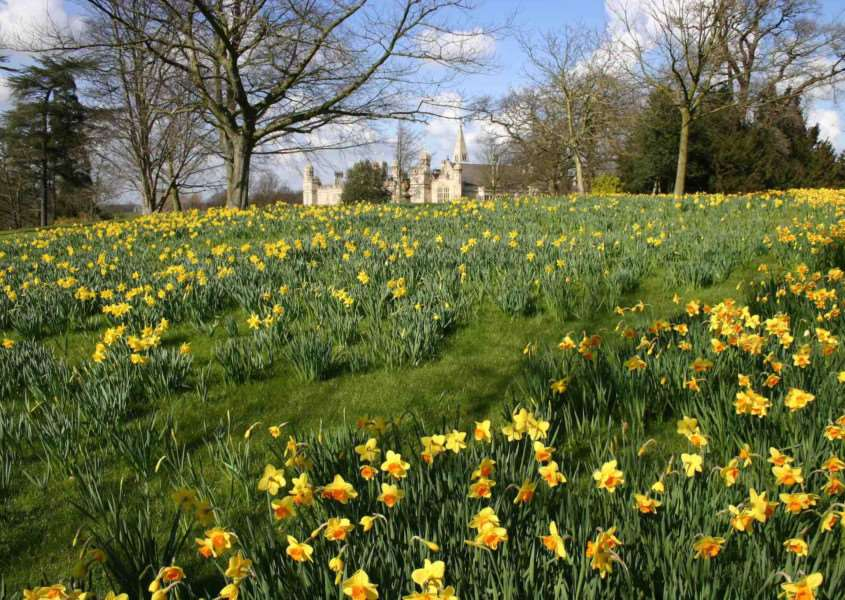 Spring bulbs at Burghley EMN-160329-103852001