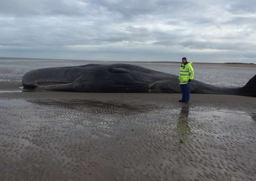 Whale at Hunstanton ANL-160402-111931001