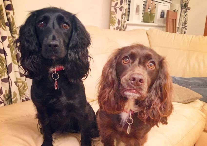 Pippa and Molly both caught Alabama Rot, but Pippa sadly died. NNL-160615-113253001