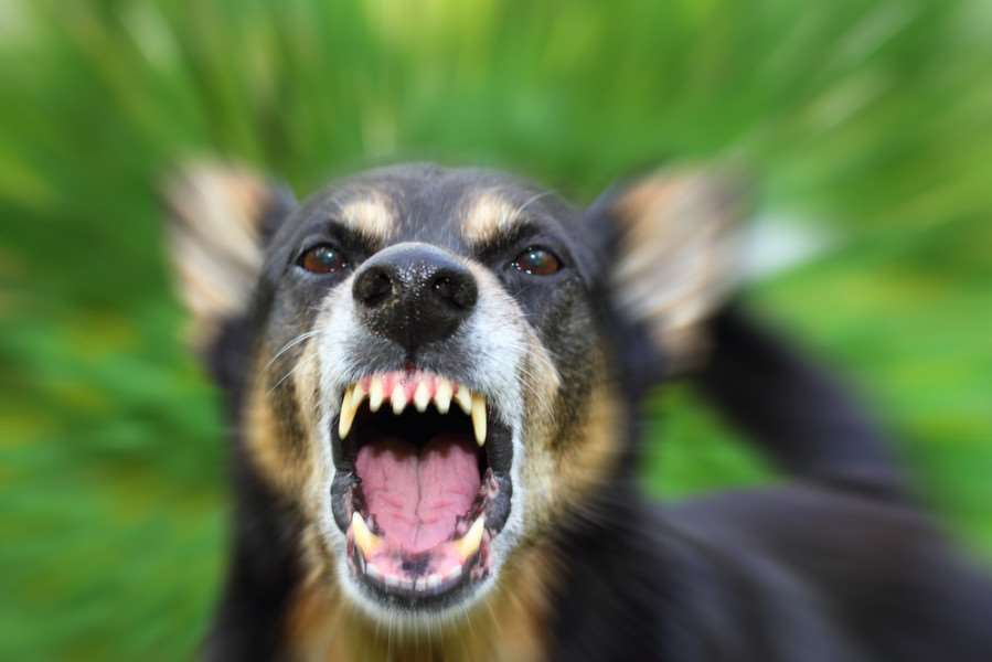 Dog attacks are on the rise