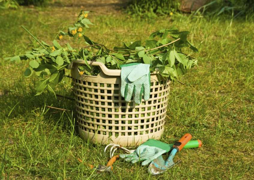 As the weather improves, many people plan a tidy up in the garden
