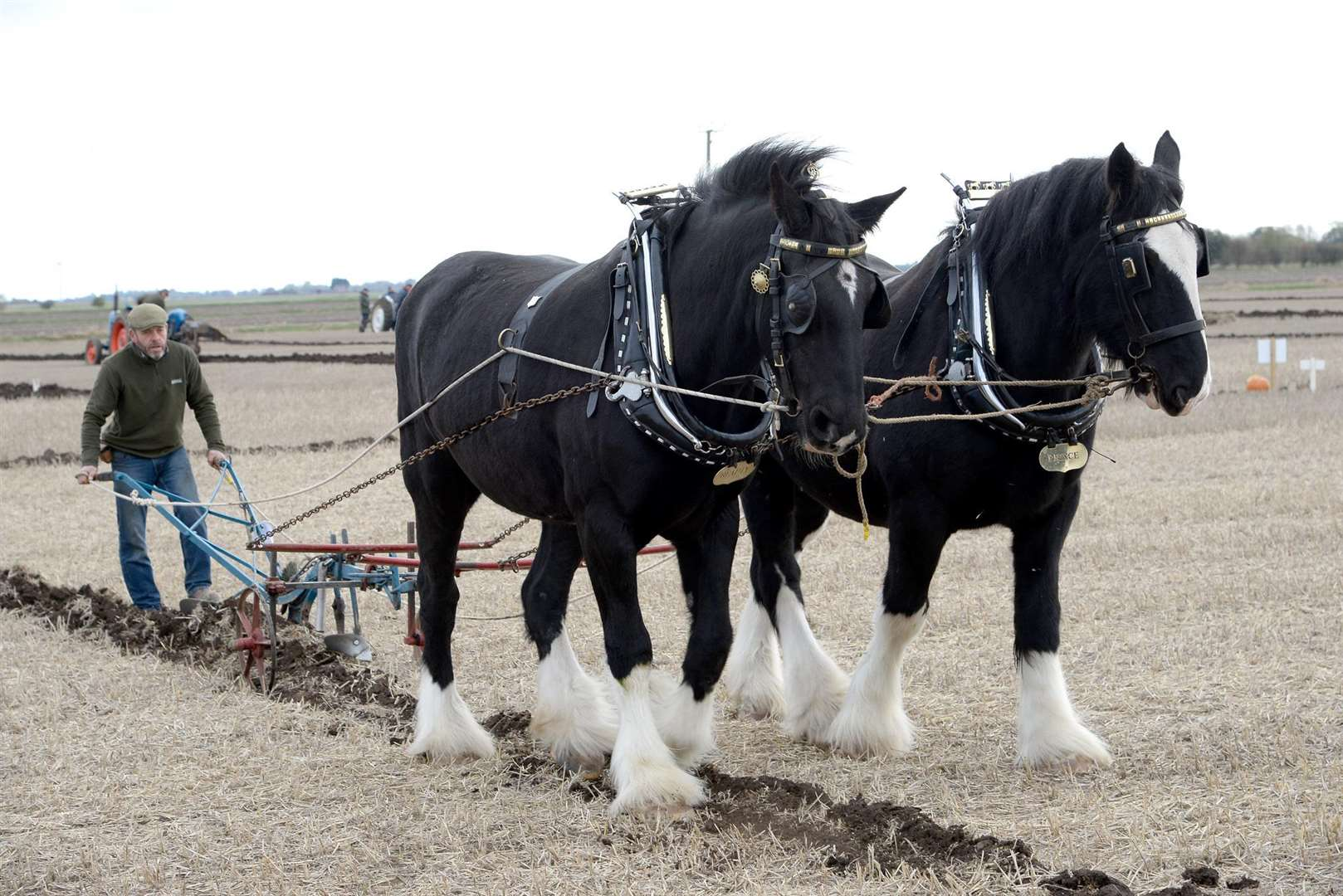 The horse drawn plough class is a spectator favourite Photo: David Pearson
