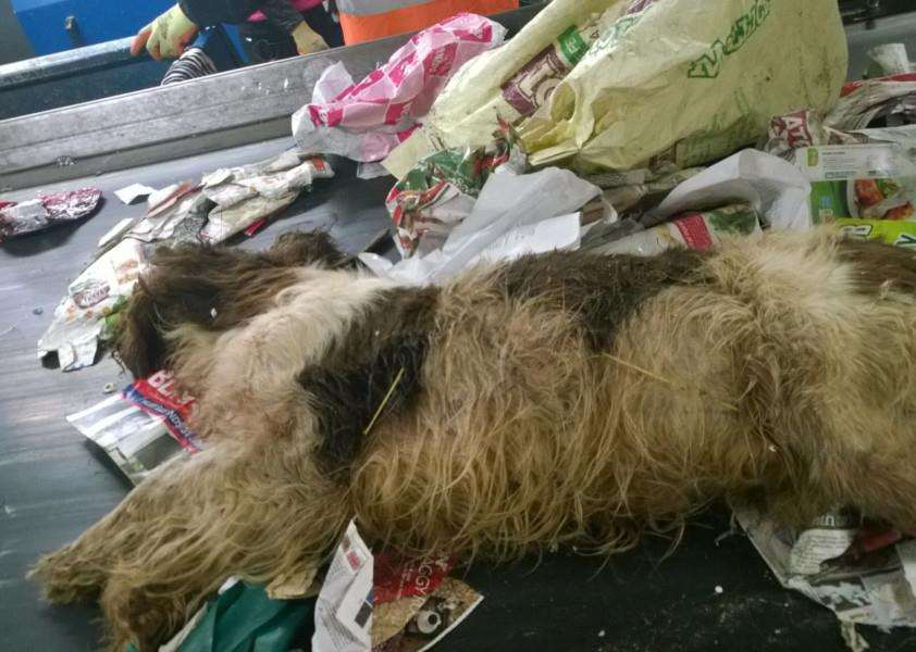 One of the two deceased dogs found amongst recycling at Lincolnshire's Caythorpe plant