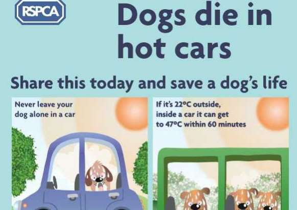 How to keep your pet cool in the heatwave