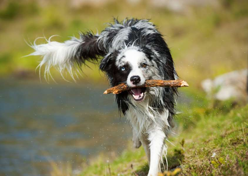 Dog owners warned over stick injuries