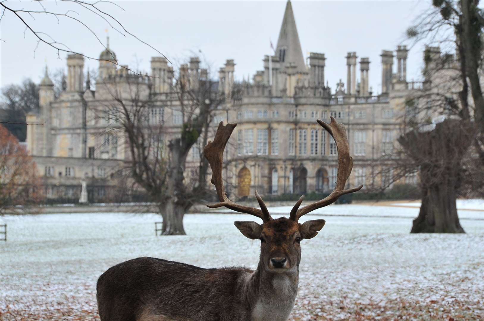 Deer at Burghley House in the winter weather