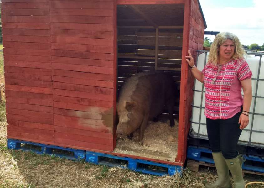 Kati Dalgleish and her pigs