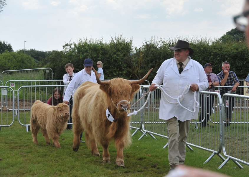 Rutland County Show 2014. Highland cattle at the show EMN-140106-184853009