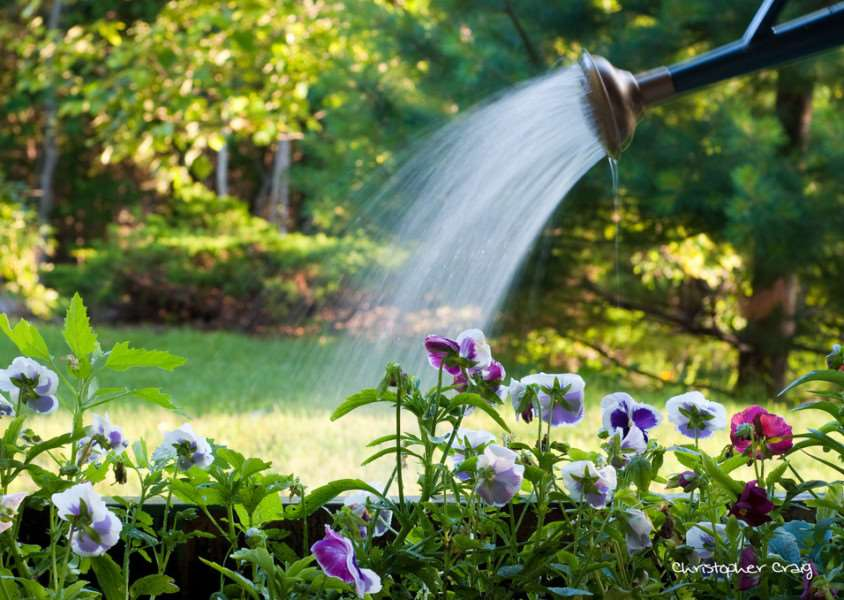 Advice and tips on garden security and insurance. Photo: Christopher Craig, via flickr.com/photos/kriztofor